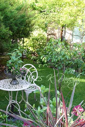 2015 June Back Garden