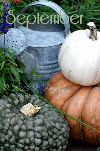 2015 Fall Pumpkins2