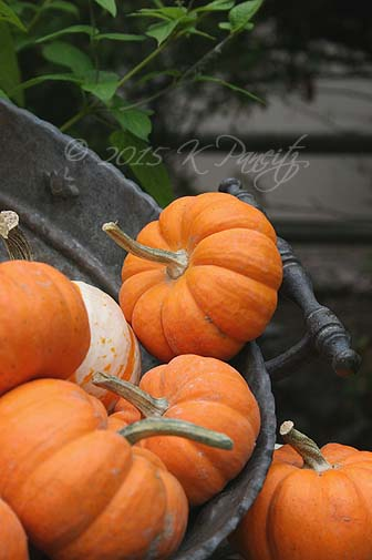 Antique Colander and pumpkins