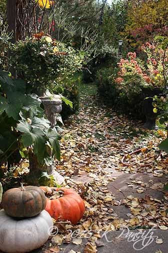 2015 Nov Back Garden2