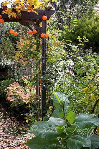 2015 Nov Back Garden3
