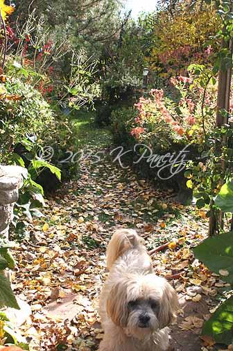 2015 Nov Back Garden4