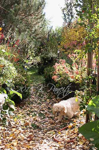 2015 Nov Back Garden1