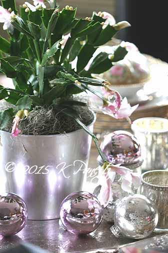 Christmas Cactus6