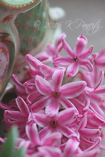 Pink Hyacinth2