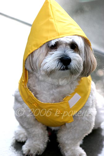 Butter raincoat