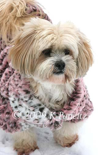 Pink leopard coat2