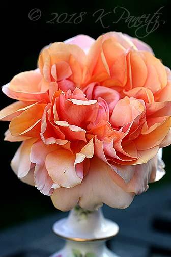 'Soul Sister' Rose5