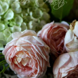 'Roses & Hydrangeas