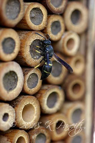 Bee House1