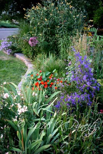Late Aug Garden