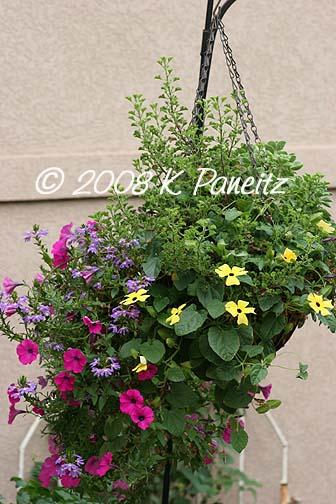 2008 hanging basket